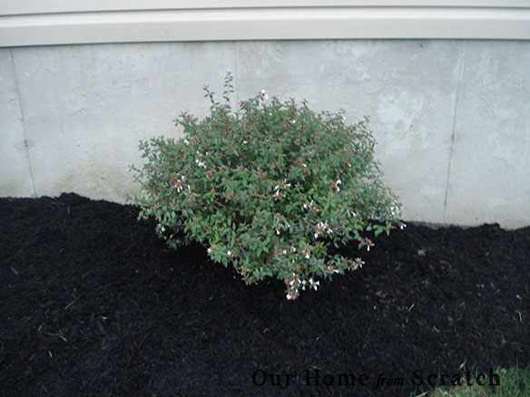 other shrub